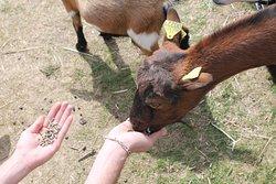On peux nourir les animaux