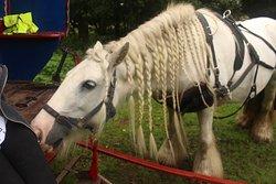 White Horse Gypsy Caravans
