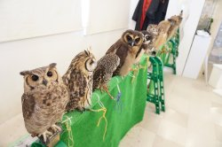 Owl Family Osaka