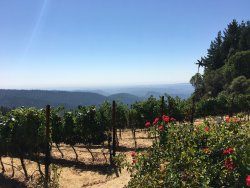 Loma Prieta Winery