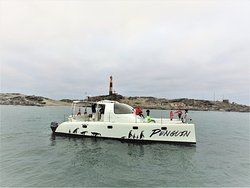 Penguin Catamaran Tours