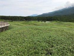 all the vegetation