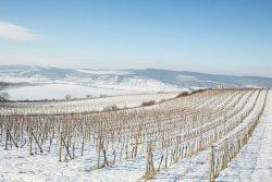 FILIBERK family winery