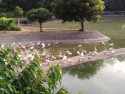 Deer Park, Ashok Vihar, Jaipur