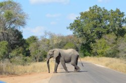 Pabeni Gate Kruger National Park