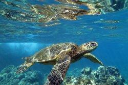 Maui Ocean Rentals