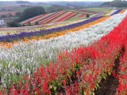 ‪Flower Land Kamifurano‬