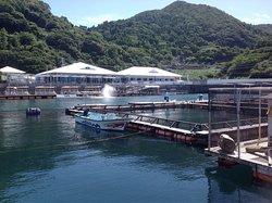 Tsukumi Dolphin Island