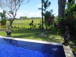 Villa Bella pool overlooking the rice paddy fields