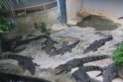 Phuket Crocodile World