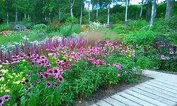 Oyuki Morino Garden
