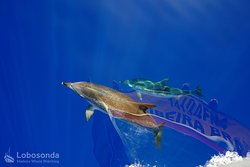 Lobosonda - Madeira Whalewatching
