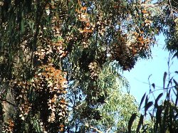 Coronado Butterfly Preserve