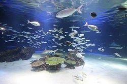 Aquarium 63 SeaWorld