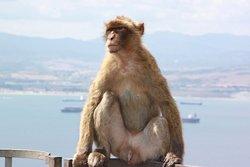 Gibraltar Official Tours