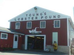 Terrific lobster roll