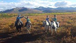 Denali Horseback Tours
