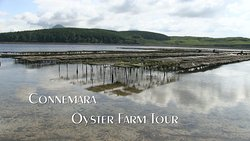 DK Connemara Oysters