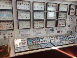 Museo Civico di Scienze Naturali