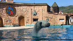 Adler Dolphinarium