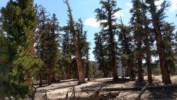 Horseshoe Meadow Trail