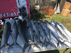 Reel Salty Fishing Charters LLC
