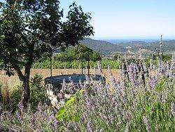 Maison des Vins de Bandol