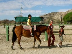 Our basotho horses take riders of all ages