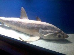 Marine Life Museum