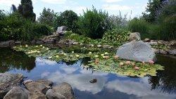 Secrest Arboretum