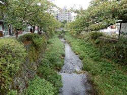 Ichinosaka River Cherry Blossoms