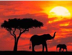 Jumbo Kenya Safaris