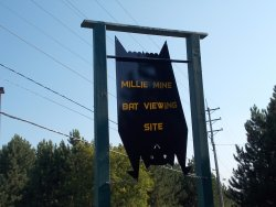 Millie Mine Bat Viewing