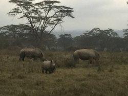 6 day Budget Safari in Kenya
