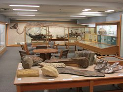 Palaeontology Museum in U of Alberta Earth Sciences building