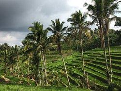 Bali Ari Tours & Driver