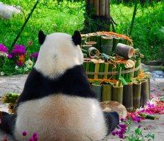 My Panda Tour