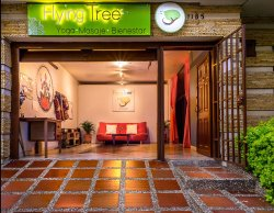 Flying Tree Yoga Studio