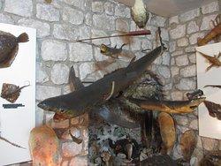 Muzej Riba i Rakova