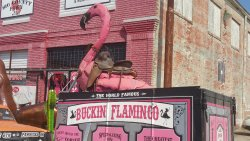 The Buckin' Flamingo