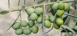 Agro-Millo | Olio Extra Vergine di Oliva di Alta Qualità