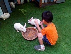 Aviary & Bunny Park