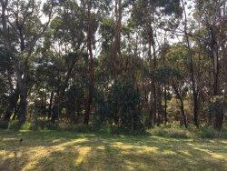 Shane's Bush Reserve