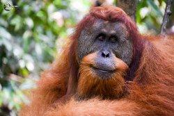 Jungle Sumatra Tour & Trek