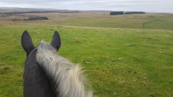 Redesdale Equestrian