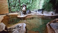 赤湯が止っているけど 洞窟温泉に入りたくて!