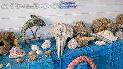 Centro di Recupero Tartarughe e Fauna Selvatica WWF