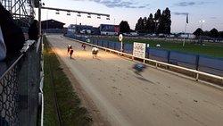 Poole Greyhounds
