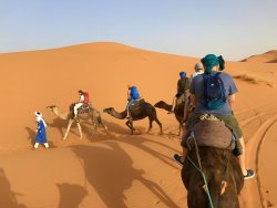 Camel Tour in the morning