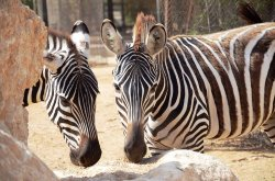 Negev Zoo